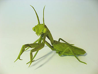 mantis.jpg